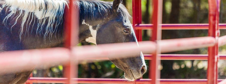 Gateway Freedom Ranch Horses